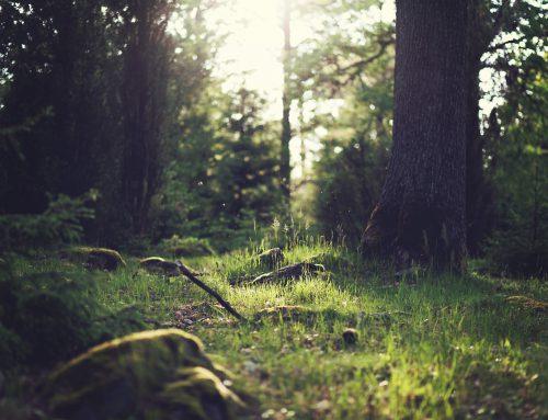 """""""Es gab ein Heim mitten im Wald"""""""