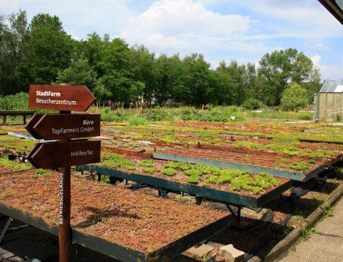 Urban Farming in der Hauptstadt