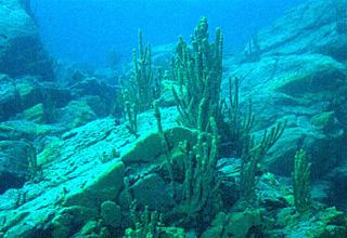состав планктона толстолобика