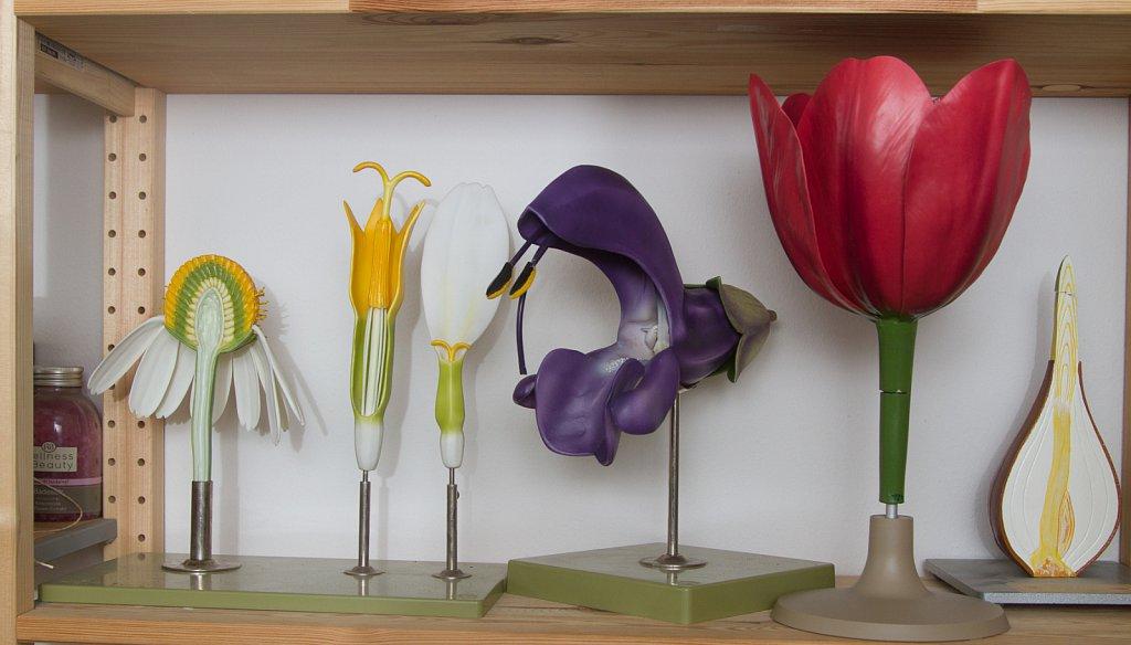 Blütenmodelle