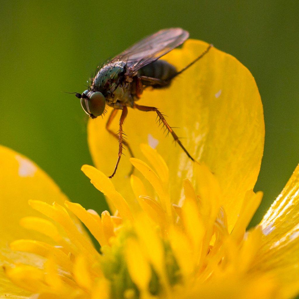 f o f - fly on flower