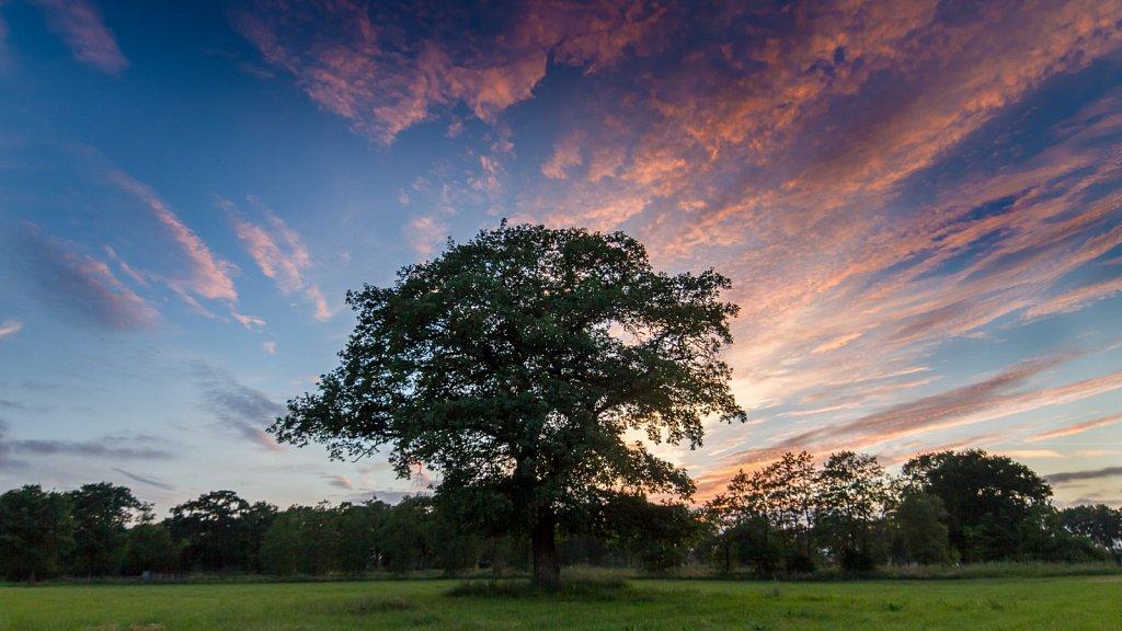 solo tree - sunset