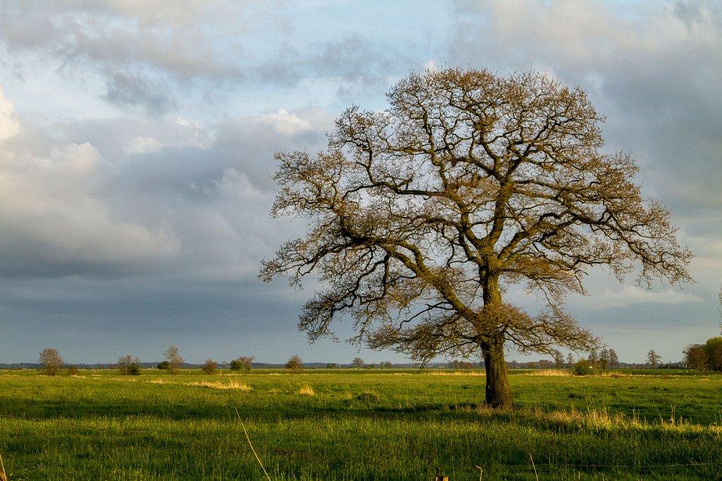 solo tree II